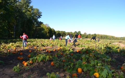 Picking Pumpkins with Friends